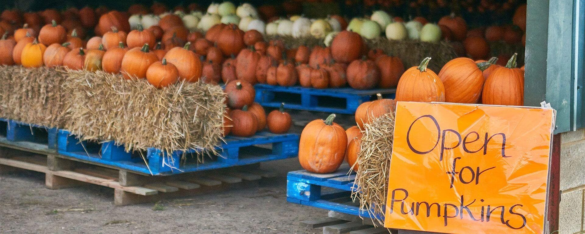 pumpkin carving with ryobi